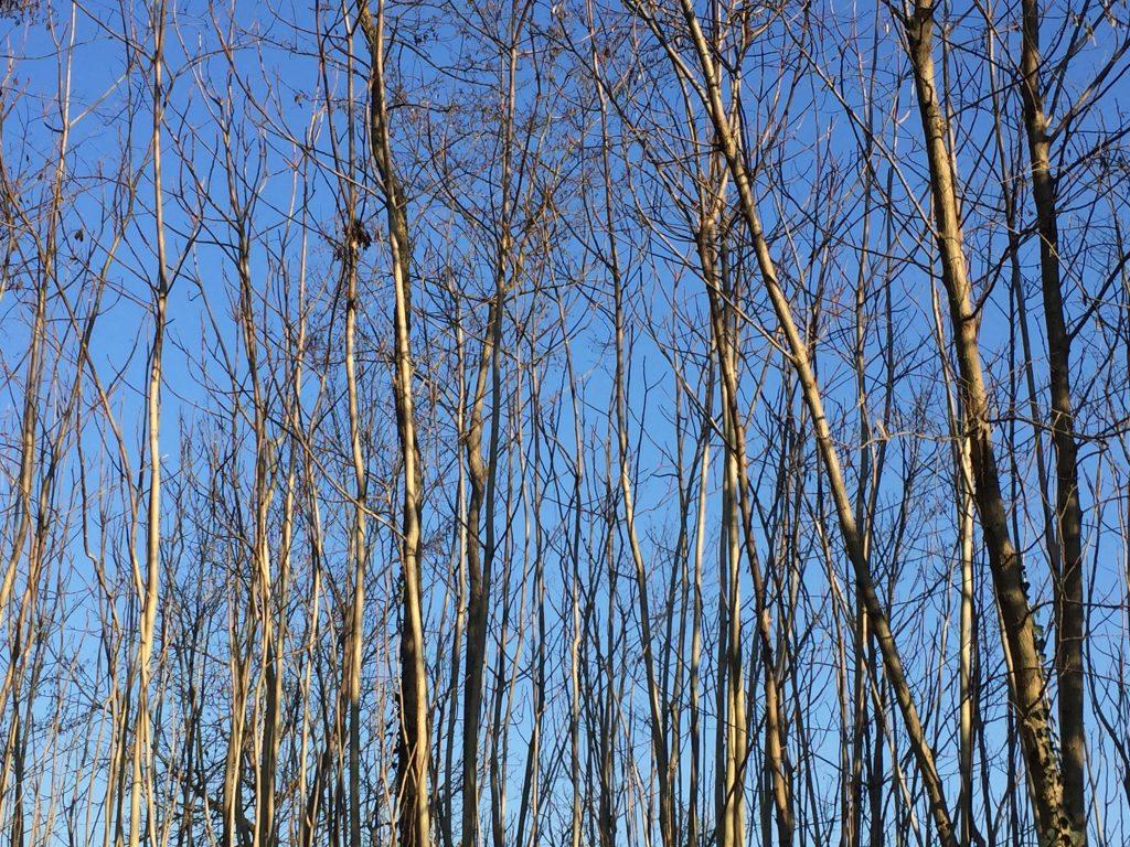 alberi e infinito